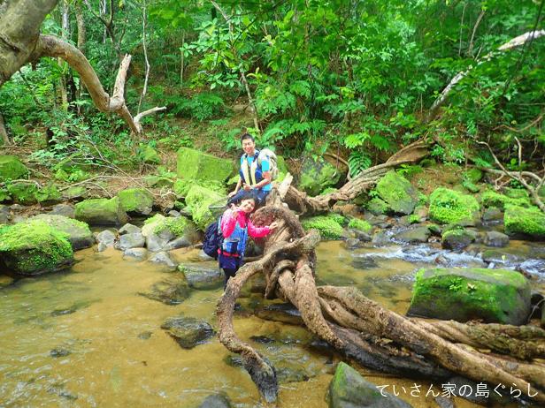 西表島ジャングル