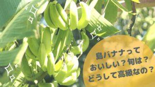 島バナナ表紙